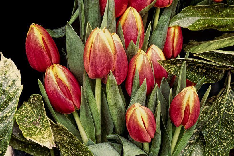Boeket rode tulpen van eric van der eijk