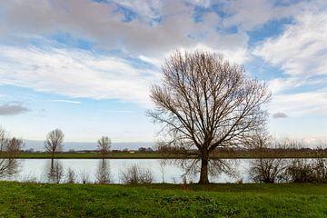 Wandelen aan de waterkant van Lieke van Grinsven van Aarle