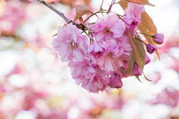 Roze bloemen aan een tak van Laura Weemering