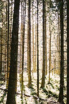 Zonlicht door de Bomen van Patrycja Polechonska