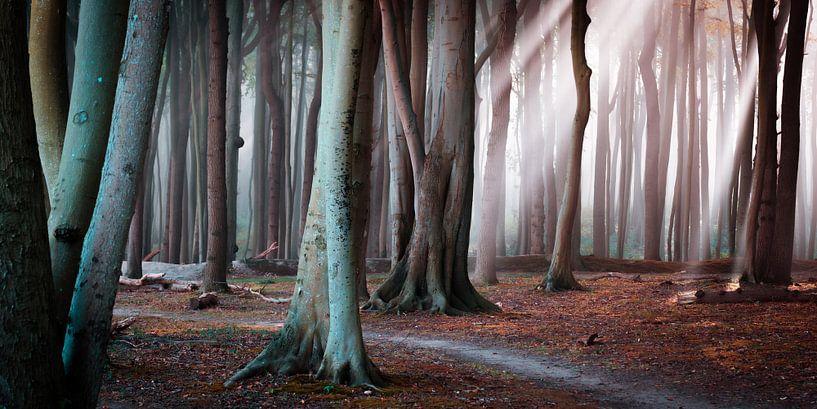 Wald an der Ostsee von Martin Wasilewski