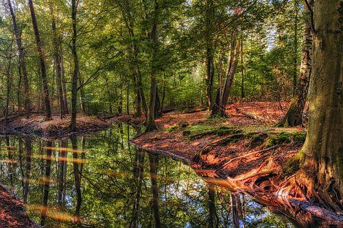 Reflecties in het bos