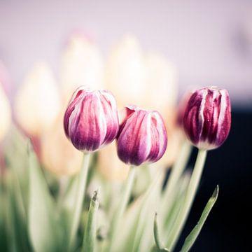 Tulpen van Erik Rudolfs