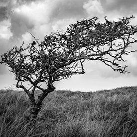 Eenzame boom op Ameland van Ron van Ewijk