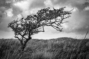 Eenzame boom op Ameland von Ron van Ewijk