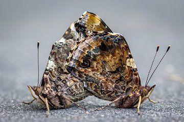 Verliebte Schmetterlinge von Martzen Fotografie