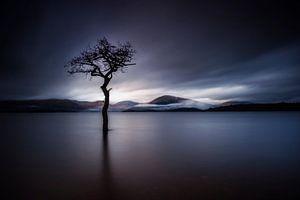 The Lonely Tree at Milarrochy Bay Scotland
