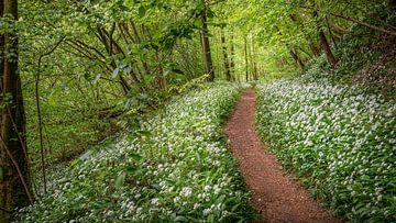 Frühling Wald von Guy Lambrechts