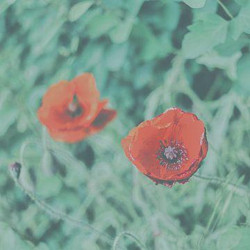 faded red flowers van Kay Mezarina Photography