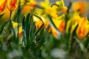 Tulpen aan de kant van de weg van Michael Nägele