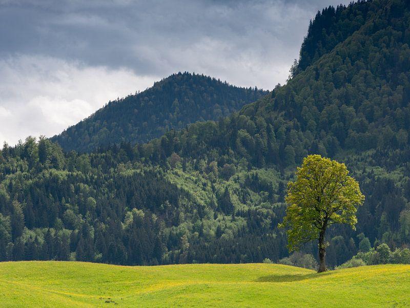 Einzelner Baum im Licht von Andreas Müller
