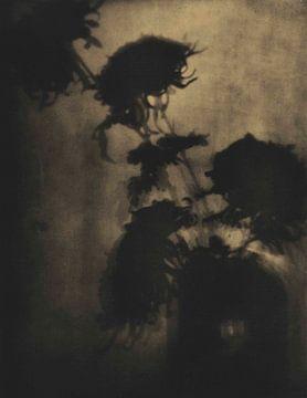 Die Schatten an der Wand von David Potter
