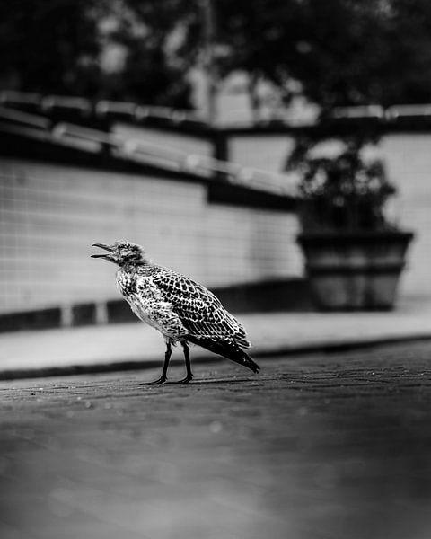 Vogel in Nood van Chris Koekenberg