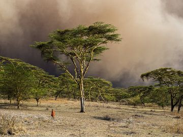 Zandstorm achter de gele Acacia bomen van Stijn Cleynhens