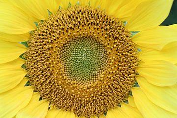 Das Herz der Sonnenblume von Geert Visser
