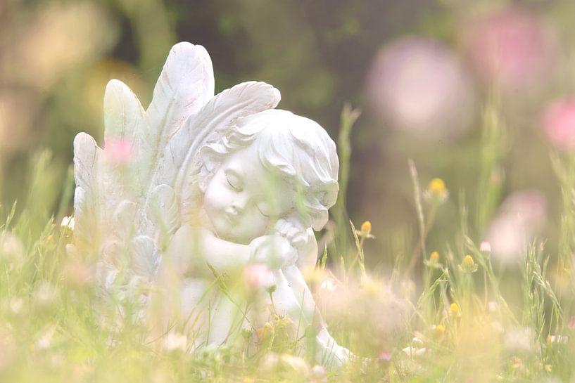 Wanneer engelen dromen van Tanja Riedel
