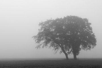 Baum im Nebel von Ron Voorhuis