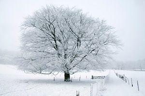 Boom in sneeuw