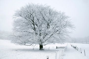 Boom in sneeuw von Herman van Ommen