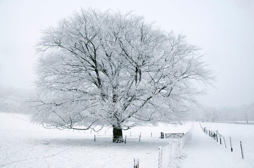 Boom in sneeuw van Herman van Ommen
