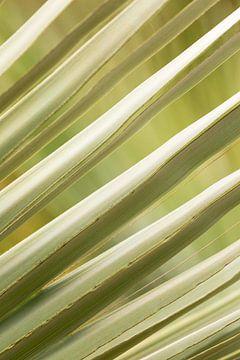 Abstracte bladeren van Isa Blom