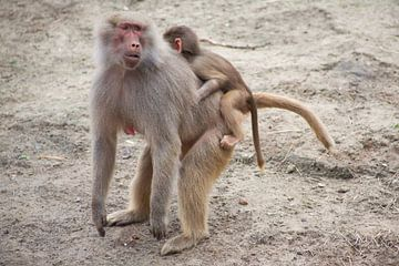 aapje met mama van marijke servaes