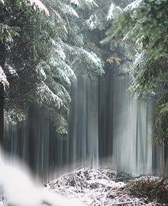 Magic trees of Belgium von