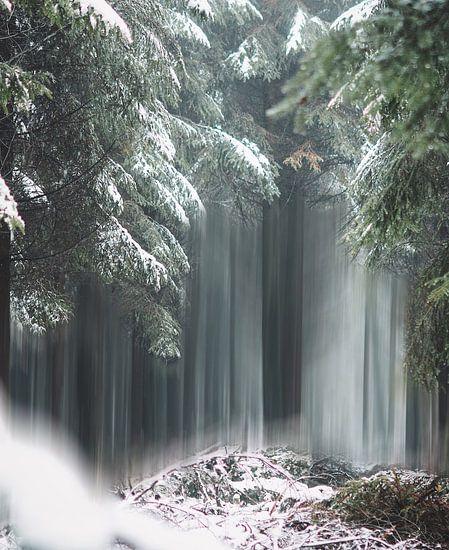 Magic trees of Belgium van Bryan Venken
