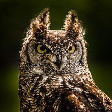 Uil von Harrie Muis