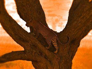 Leopard in tree von Rianne Magic moments