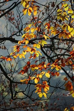 Goldener Herbst VIII von Meleah Fotografie