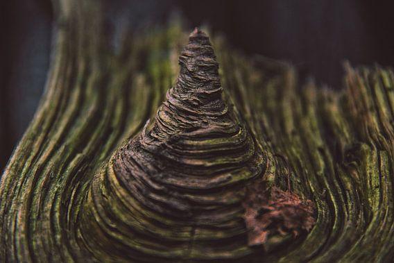 Hout Met Textuur. Prachtig stuk hout.