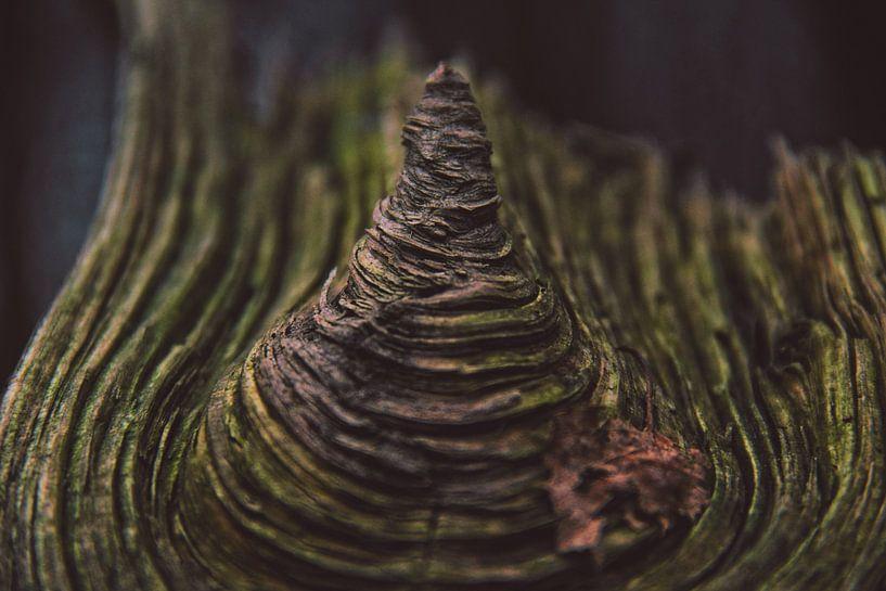 Hout Met Textuur. Prachtig stuk hout.                                               van Niek van den Berg