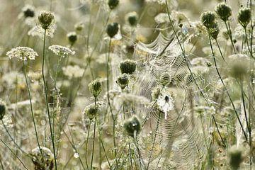 Spinneweb in bloemenveld van Theo van Woerden