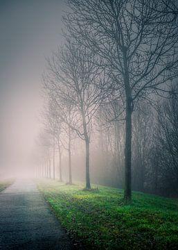 In den Nebel gehen von Wim van D