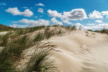 Duinen aan de Noordzee van Steffen Peters