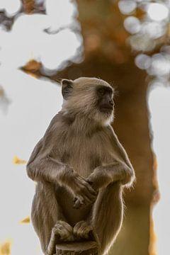 aap op een stokje von Bart Berendsen