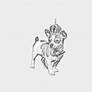 Chihuahua von Felix Brönnimann
