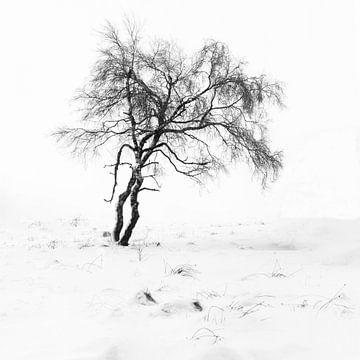 Tanzen im Schnee von Guy Lambrechts