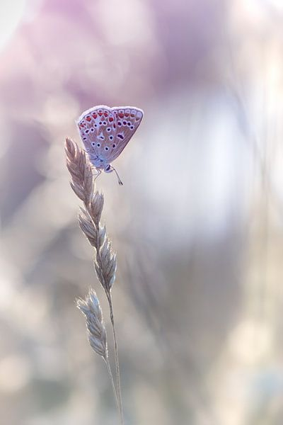 Vlinder van Judith Veenstra