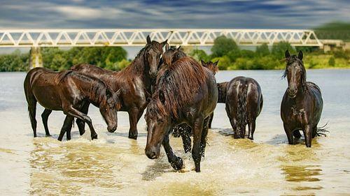 Paarden in het water van