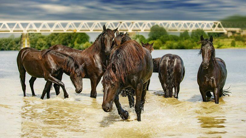 Paarden in het water van Above The Grid