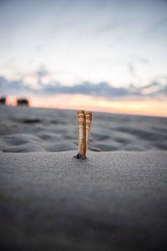 schelpen staand in het zand