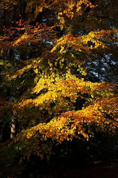 Herbst in Amsterdamse Bos von Johan Zwarthoed