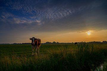 Zonsondergang in het weiland van Jos Krick Photography