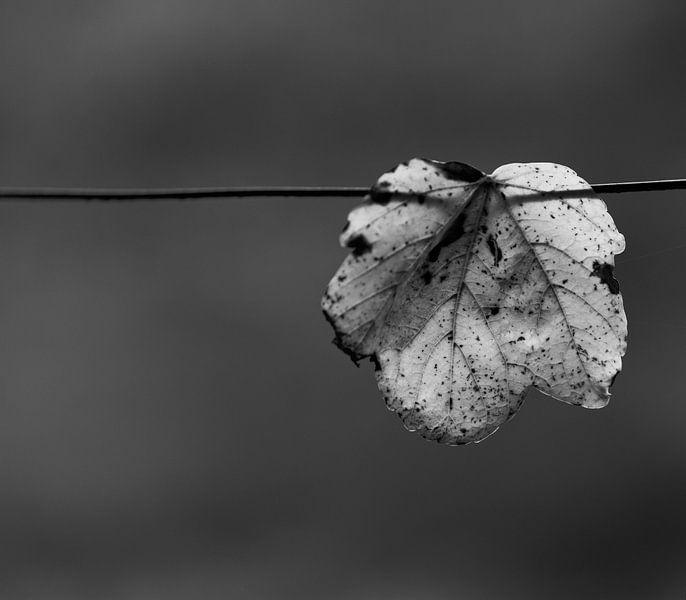 Eenzaamheid van noeky1980 photography