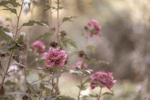 bloemen part 16 van Tania Perneel