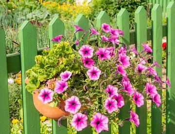 Blumenkasten mit rosa Petunien an einem Zaun von ManfredFotos