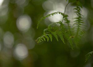 Varen in het groen