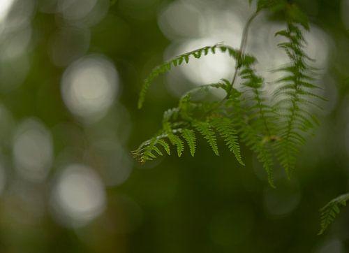 Varen in het groen van